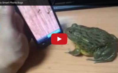 Frog Eats Smart Phone Bugs