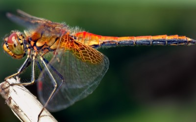 Is There A Heaven? What We Can Learn From Dragonflies