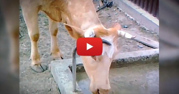I Have A Totally New Perspective On Cows!
