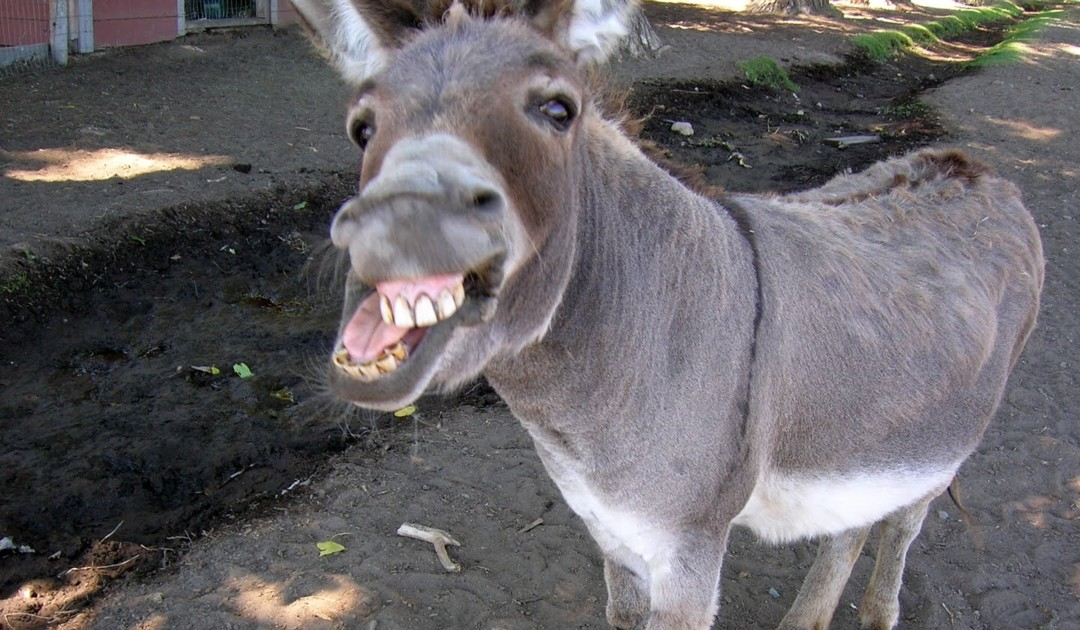 The Parable Of The Donkey
