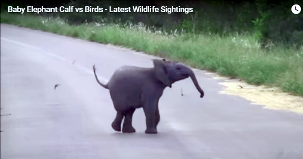 Baby Elephant Sets Wonderful Example On How To Find Friends!