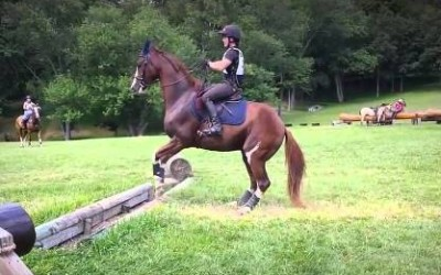 Hesitant Horse Provides Many Laughs