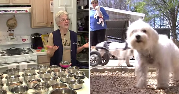 House With a Heart – Retirement Home for Senior Pets!