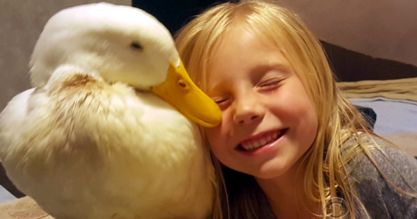 A Little Girl And Her Duck