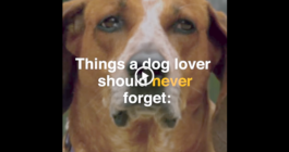 Things a Dog Lover Should Never Forget